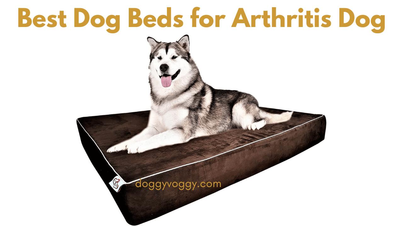 Best Dog Beds for Arthritis Dog