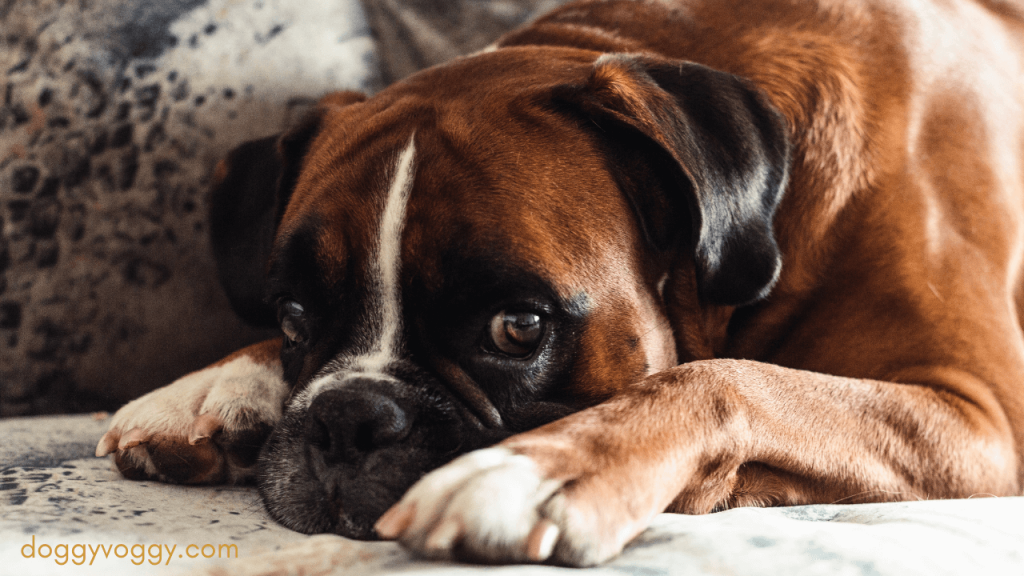 Different Types Of Dog Beds For Boxers