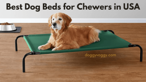 Best Dog Beds for Chewers in USA