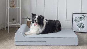 What To Look in a Greyhound Bed