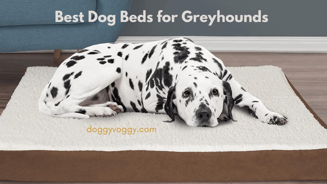 Best Dog Beds for Greyhounds
