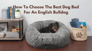 How To Choose The Best Dog Bed For An English Bulldog