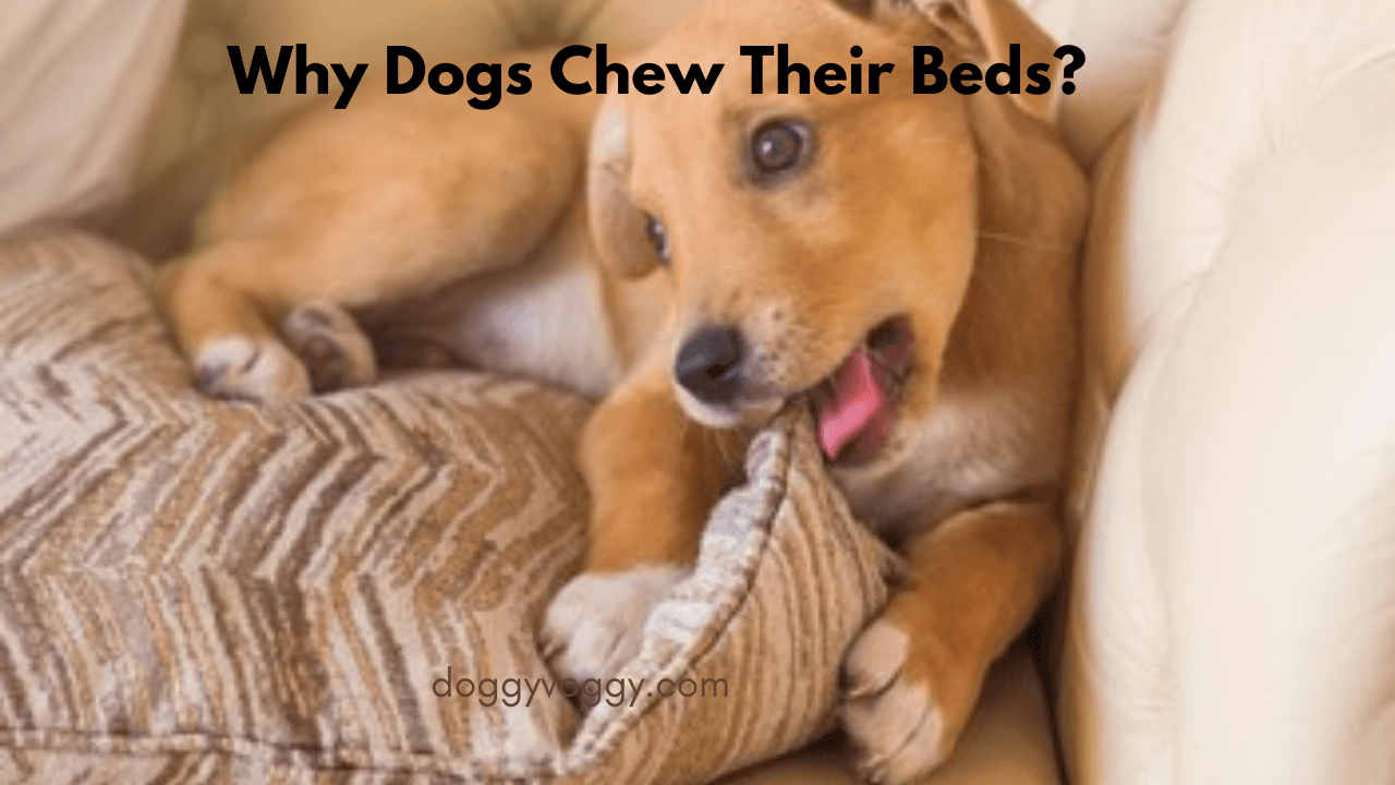 Why Dogs Chew Their Beds & How To Stop It Quickly