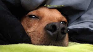 6 Steps to Wash A Dog Bed Without A Removable Cover