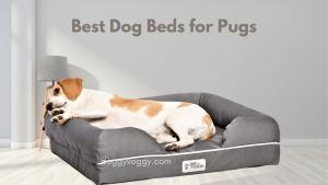 Best Dog Beds for Pugs