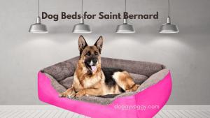 Dog Beds for Saint Bernard