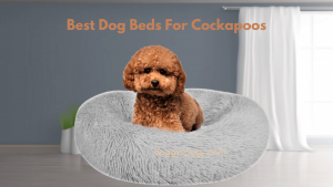 Best Dog Beds For Cockapoos